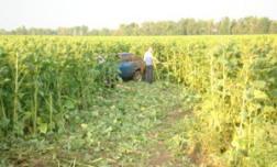 Хроника ДТП в Краснодарском крае за 21 июня 2012 года