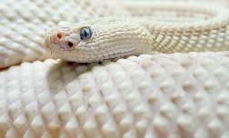 Как встречать Год Змеи